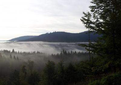 Murgschifferschaft.de - Nebelwald