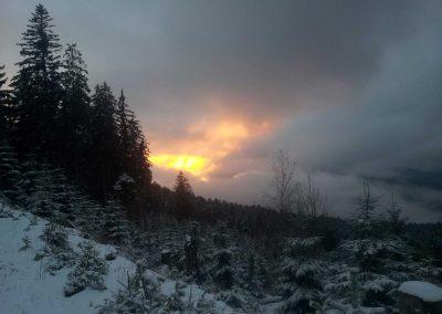 Murgschifferschaft - Winterwald